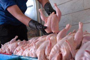 افزایش قیمت مرغ در صورت حذف ارز مبادلهای/مکاتبه با وزیر صنعت